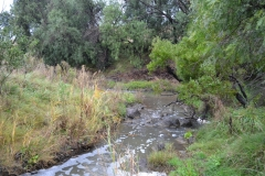 11-Toolern-Creek-Werribee-River-Fri-25-May-2012